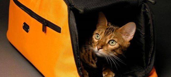 С кошкой в дорогу: важные советы для поездок и путешествий