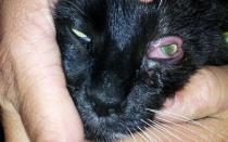 Из-за чего кошка не открывает один глаз?