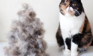Из-за чего кошка сильно линяет?