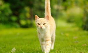Что делать когда у кошки болит возле хвоста?