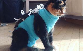 Стерилизация кошки: оптимальный возраст, плюсы и минусы