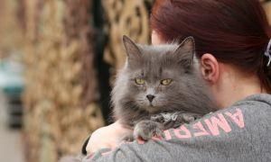 Как заслужить уважение кошки