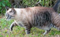 Почему у кошки обвис живот?