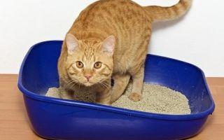 Почему кошка часто ходит в туалет по-маленькому: опасные последствия