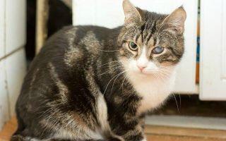 Почему у кота помутнел глаз: причины, методы лечения