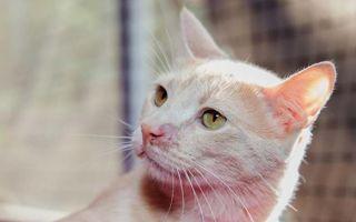 Лишай у кошки: разновидности и основные признаки, лечение и профилактика