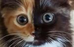 Почему возникают прыщи за ушами у котов?