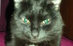 Из-за чего выпадает шерсть у кошки?