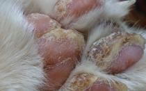 Как избавить кота от наростов на подушечках?