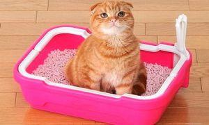 Обзор наполнителей для кошачьего лотка