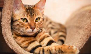 Чем кормить стерилизованную кошку: принципы и правила