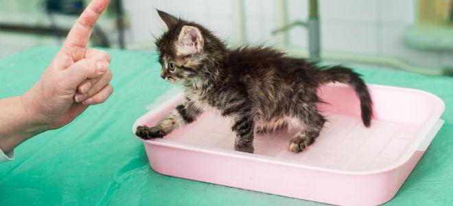 Как приучить котенка к лотку: 5 эффективных способов