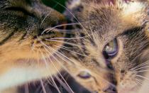 Стоит ли тревожиться если кошка постоянно вылизывается?