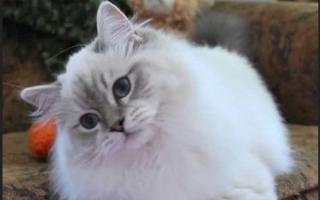 Кошку укусила оса: как и чем помочь питомцу?