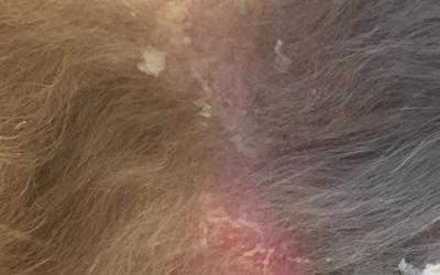 Сухая кожа у кота