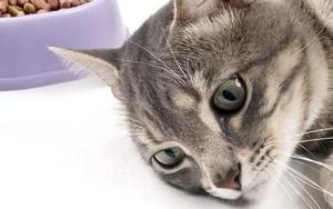 кот перестал есть