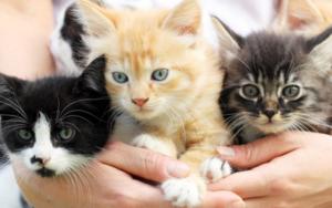 появился у кошки прыщ за ухом