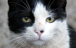 у кошки на языке черные точки