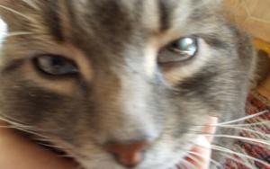 слезятся глаза у кошки фото