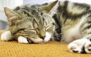 у кошки дергается голова