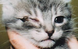 у кошки глаз не открывается