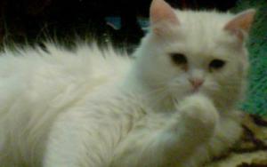 у кошки слезятся глаза коричневым фото