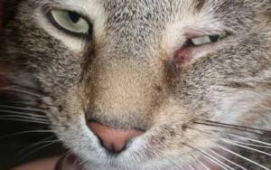 у кота не открывается глаз