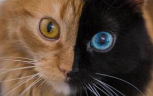 у кошки изменился цвет шерсти
