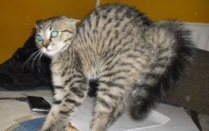 кот поджимает хвост фото