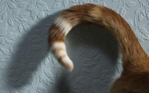 у кошки болит возле хвоста фото