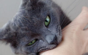 у кота сломался клык фото