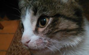 выпадают усы у кошки фото