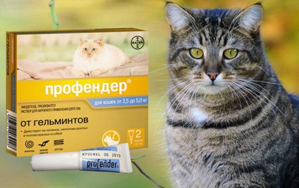 """Препарат """"Профендер"""" для борьбы с глистами у кошек"""
