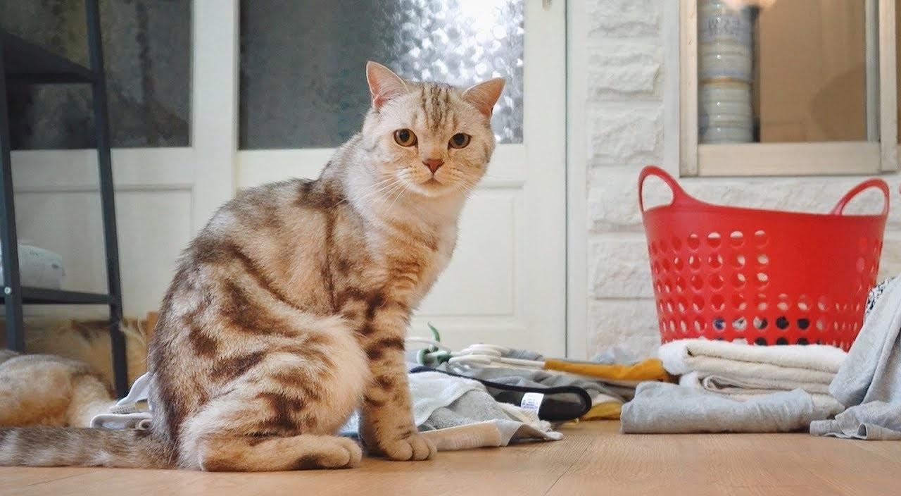 кот портит вещи