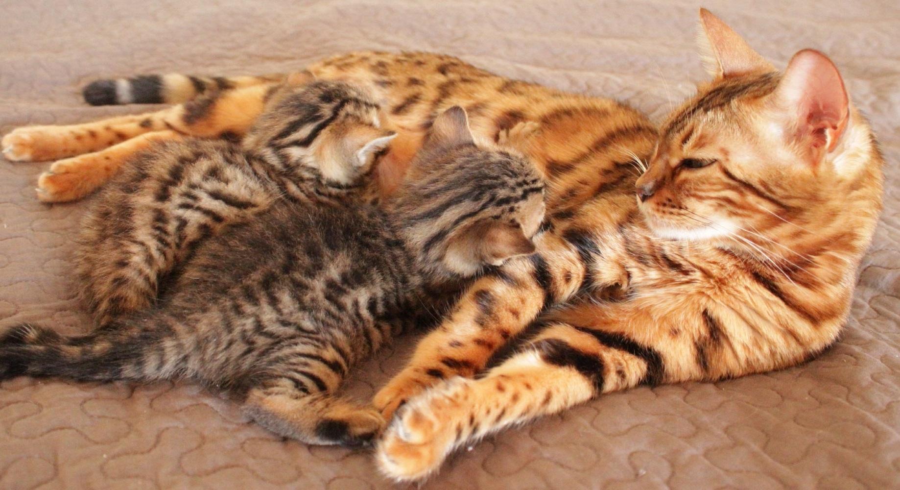 иммунитет котят