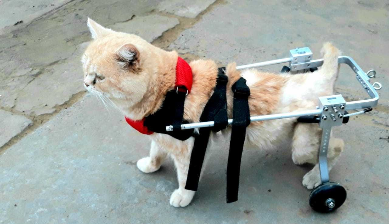 паралич у кота