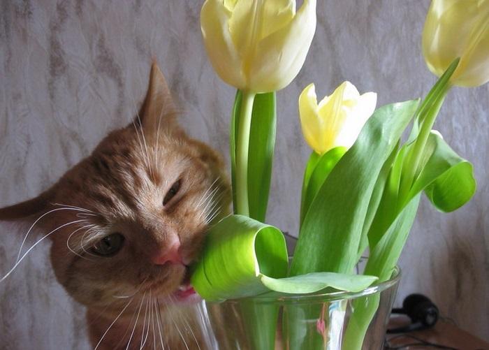 кот есть цветы