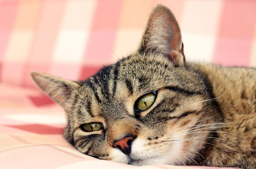 болезнь кота