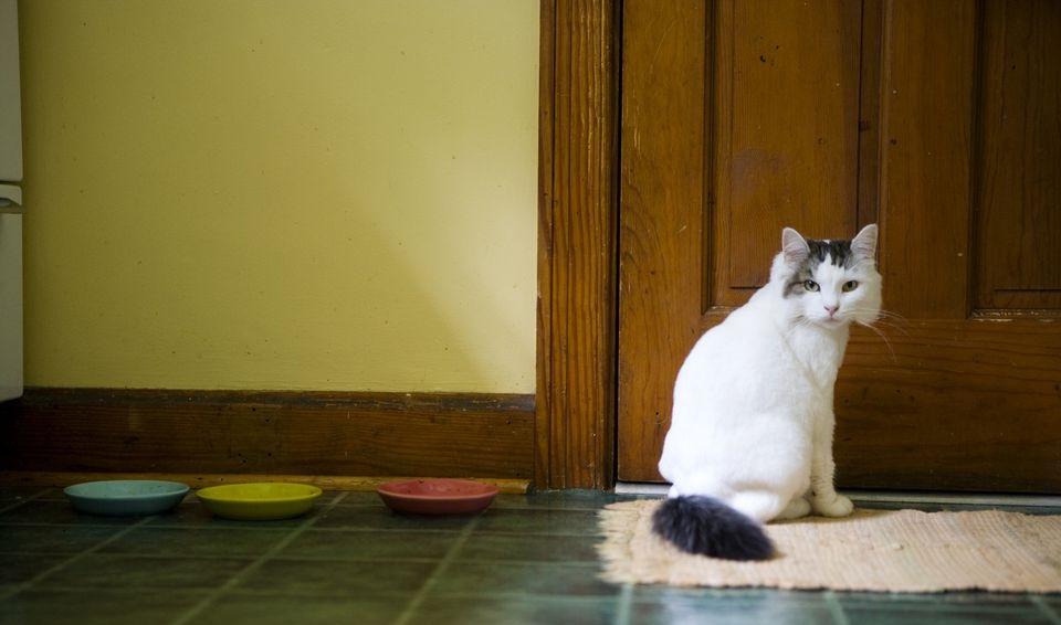 диета кошки