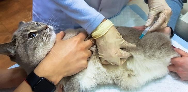 медикаментозная стерилизация