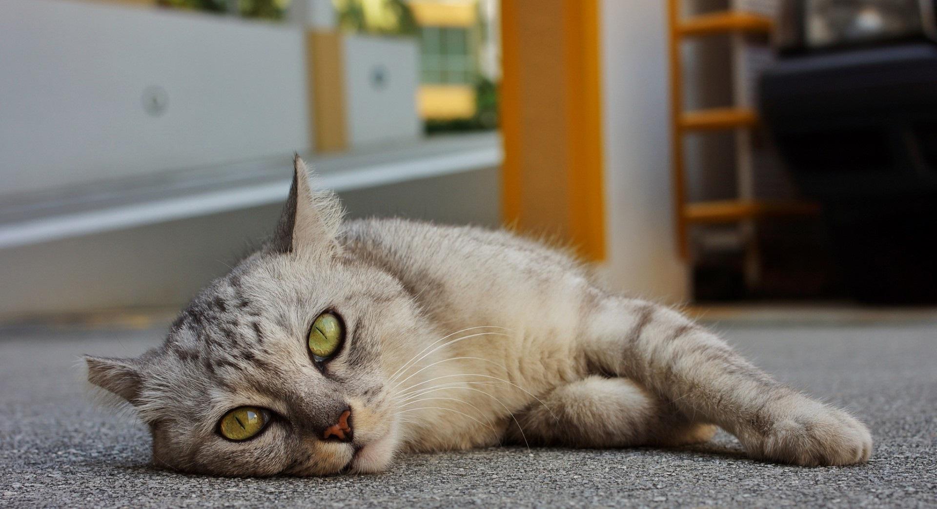 плохое самочувствие у кошки