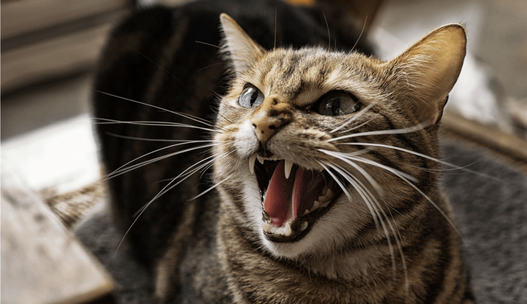 агрессия кошки