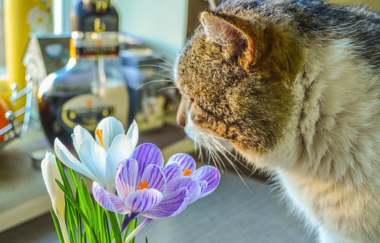 у кота аллергия на цветы