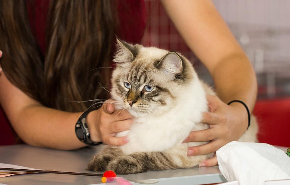 осмотр кота