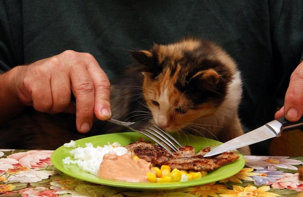 неправильное питание кота