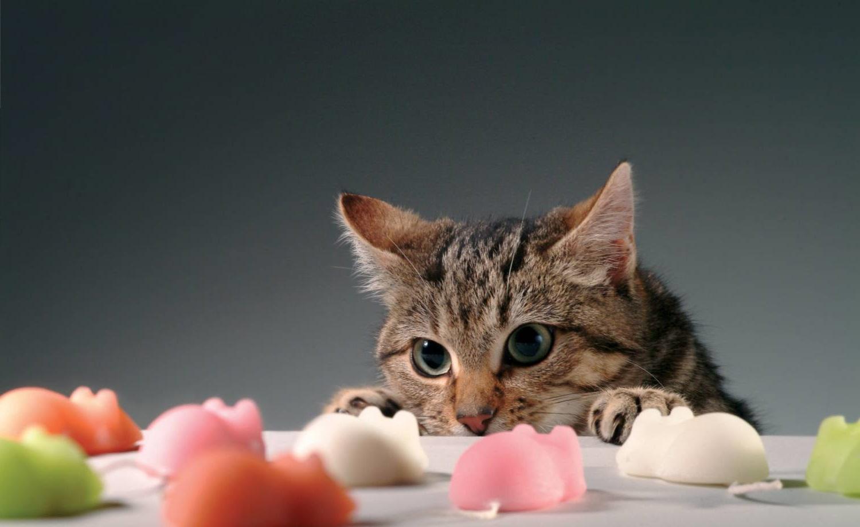 лакомства для кота