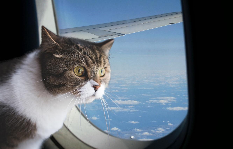 с кошкой в самолете