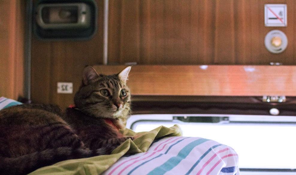 с кошкой в поезде